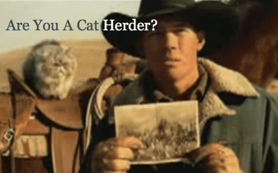Website Security in The New Year 2021 – Are You A Cat Herder?
